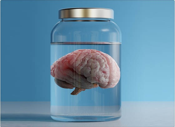 cerebro_crecer_resulta