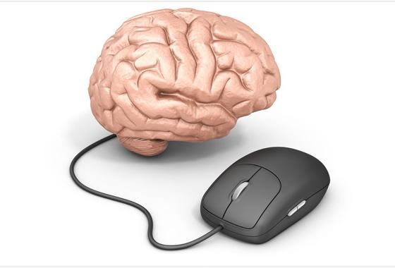 mouse_cerebro
