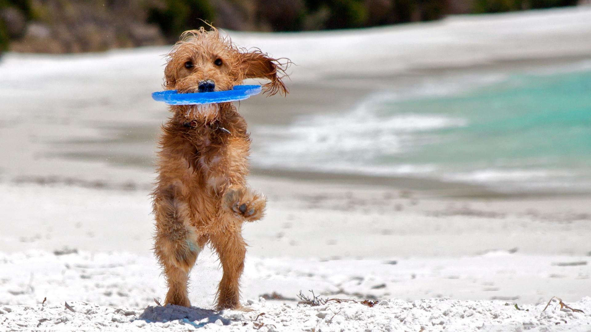 perros-en-puertopeñasco2
