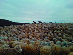 Arrieros de Tierra Del Fuego – Primer Lugar Enseñanza Básica 2015 – Javiera Jacquelin Flores Ferreira – 6° Básico Escuela Rural Pampa Guanaco – Región de Magallanes